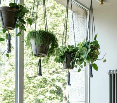 Hangde-planten-keuken