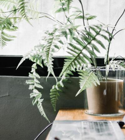 Planten-keuken